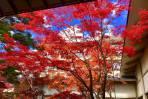 紅葉へいこうよ~♪ 第三弾「錦秋」