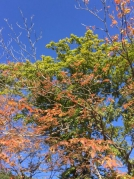草津温泉周辺の紅葉